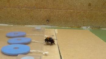 Eszközhasználatra is betanítható egy méhkolónia