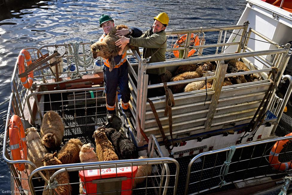 A szigeten a legtöbben állattenyésztéssel foglalkoznak. Birkákat, kecskéket és pónikat nevelnek, amiket hajóval szállítanak el a piacokra. Mivel a szigeten többféle feladat van, mint ahány ember, mindenkinek több állása van, ott segít, ahol tud. Aki épp nem állatokkal foglalkozik, az tanít az iskolában, kíséri a turistákat, vagy a kikötőben segít a hajósoknak.