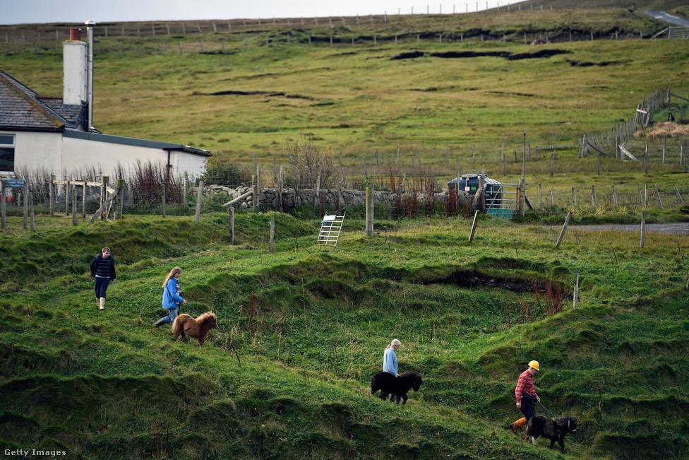 A Gear család tagjai az eladásra szánt pónikat viszik a kikötőbe. A szigeten nagyjából 1500 póni él, ez ötvenszerese a szigeten lakó emberek számának. A rövid lábú, vastag bundájú shetlandi póni egy rendkívül értékes állatfaj, nemcsak szépek, hanem intelligensek is, több ezer évvel ezelőtt az emberek úgy éltek és bántak ezekkel az állatokkal, mint ma a kutyákkal. A képen jobbról a második Sheila Gear, akit korábban postásként láttunk.