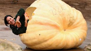Az ember, aki 500 kilós Halloween-tökben akarja átevezni a Velencei-tavat