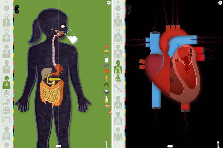 """A """"The Human Body by Tinybop"""" alkalmazás"""