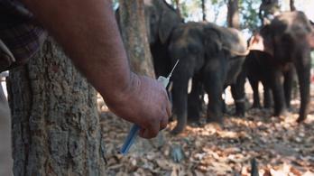 Egy elefántot is kiüt a Kínából beszerezhető szuperdrog