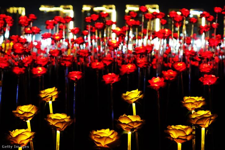 Ötvenezer sárga és piros rózsa fénylik.