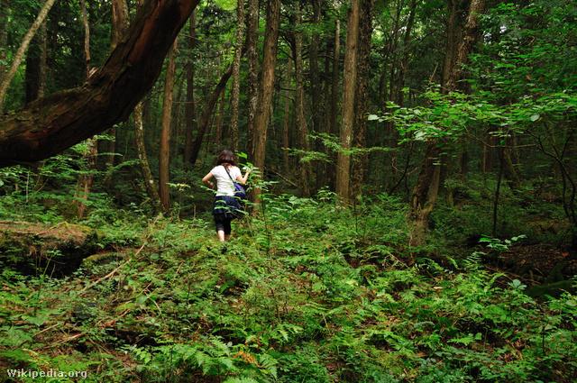 Aokigahara ma sok turistát vonz, akik mind át akarják élni az erdő hátborzonható légkörét