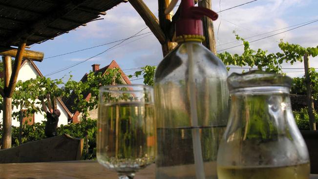 Jótékonyságra fordítják Bécs legkisebb szőlőbirtokának 50 üveg borát