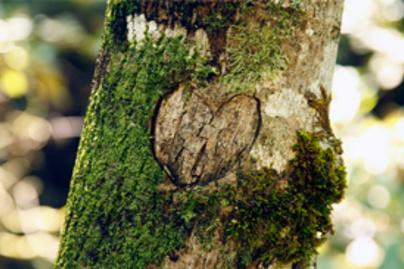 fa sziv lead