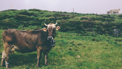 Elő a fondüvel: itt a svájci sajtkalauz