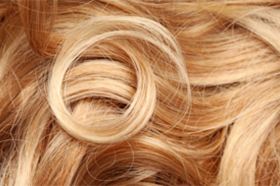 haj csiga kicsi