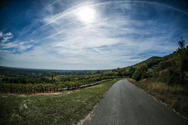A Mátra déli lankái éppen ideálisak a szőlőtermesztése. Különleges talaj és sok napfény várja.