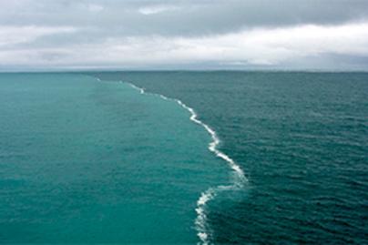 tengerek lead