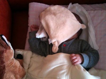 alvóállat a fejen