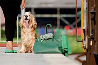 kutya vonat lead