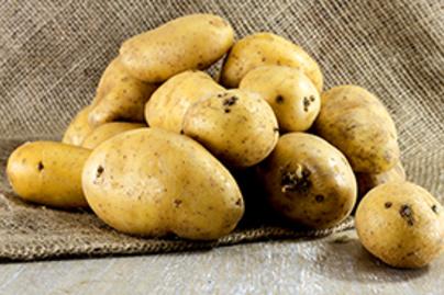 zsir ellen krumpli lead
