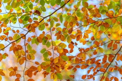 oszi levelek lead