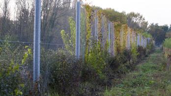 A magyar kerítést szép lassan benövi a gaz