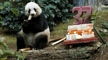 Elaltatták a világ legöregebb pandáját