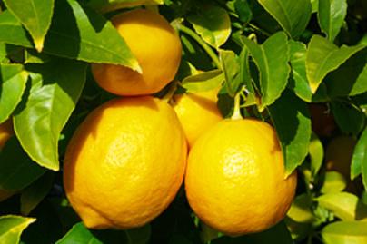 citrom sarga