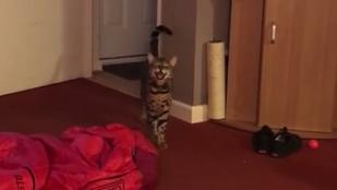 Ez a macska a duett műfajában alkotott maradandót