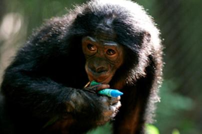 bonobo kolyok