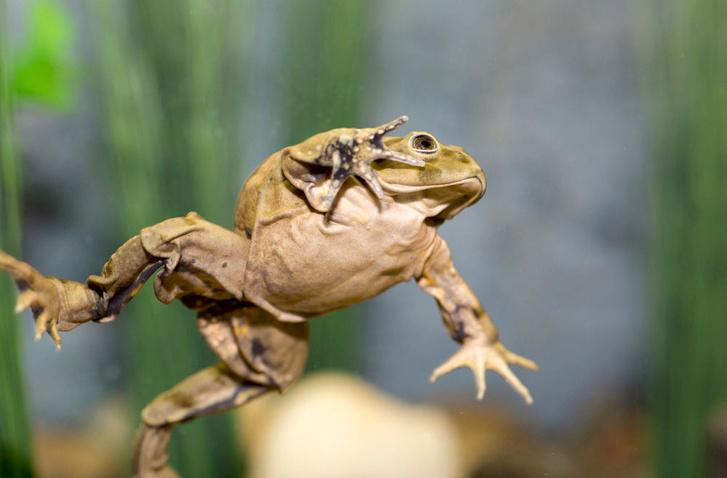 lake-titicaca-frogs-2-skin