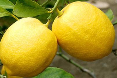 citrom1