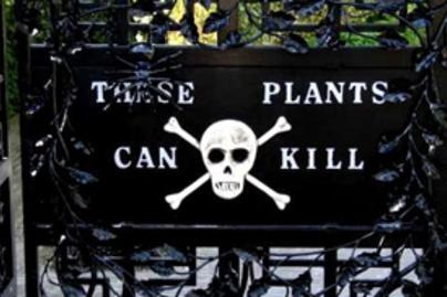 gyilkos kert
