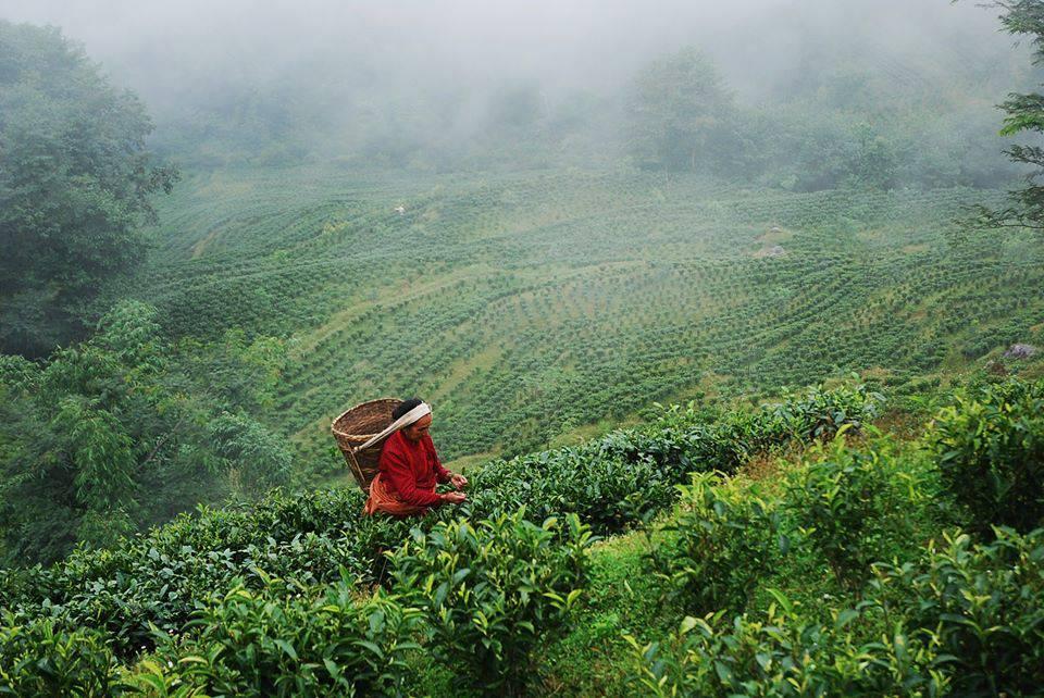 Közeleg a teaforradalom: öt dolog, amit sokan nem tudnak a teáról