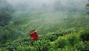 Közeleg a teaforradalom