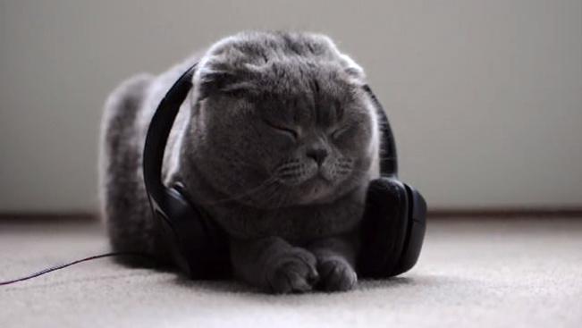 Óriási sikere van a bántalmazott macskáknak készült lemeznek
