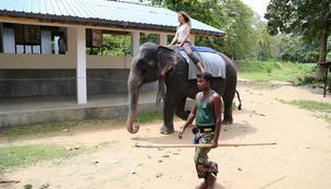 Hadat üzent az elefánttúráknak a TripAdvisor