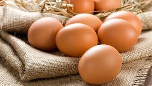 Szalmonellás lengyel tojásokat kapcsoltak le