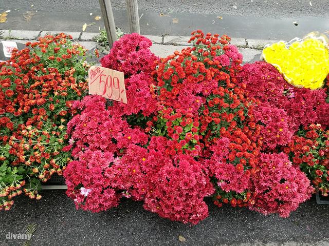 És a virágok is szépek.