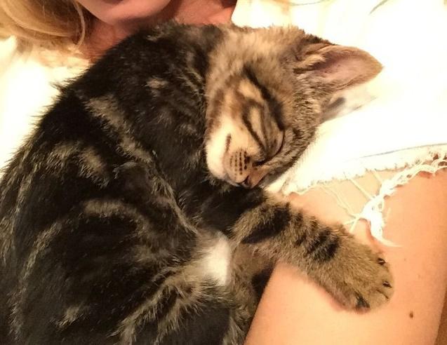 Ön szerint ki ölelgeti ezt a cukormanó macskát?
