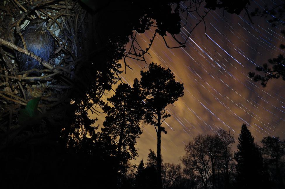 XI. Napnyugtától napkeltéig (kategória) |  1. Potyó Imre: A rigó hálószobája