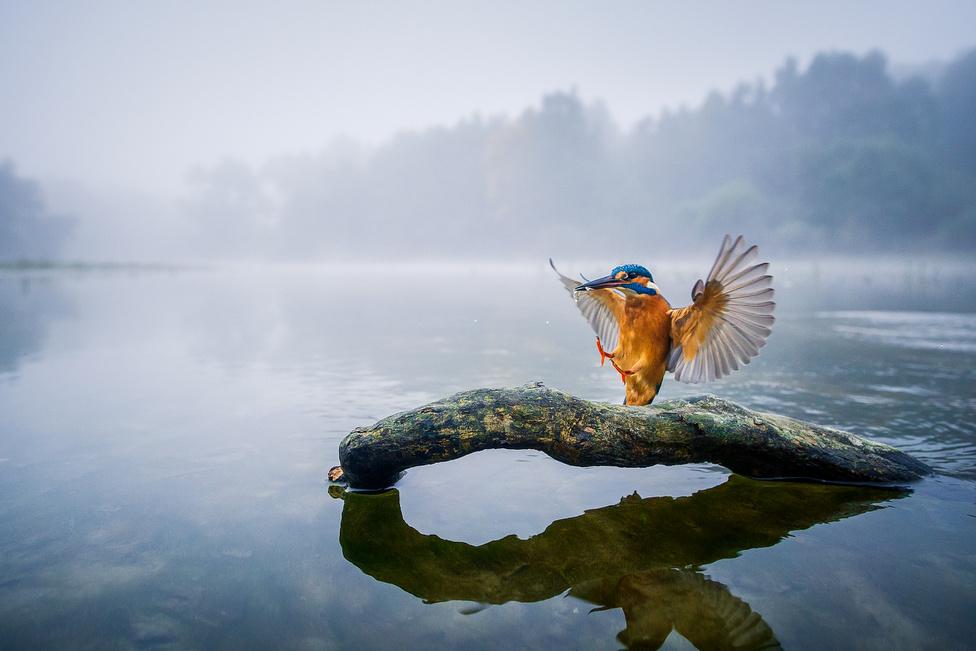 V. Az állatok és környezetük | 1. Kis Dávid: Hajnali fogás