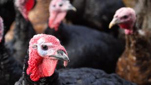 Kell-e félnünk a madárinfluenzától?