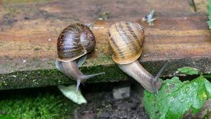 Jeremy, a génhibás csiga nehezen, de végre elvesztette a szüzességét