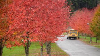 Európában miért sárgák az őszi levelek, és Amerikában miért vörösek?