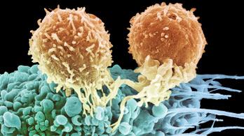 Először használtak gyors génszerkesztést a rák ellen