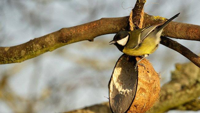 Ha egyszer megetette, többet nem hagyhatja magára! -Téli madáretetési kisokos