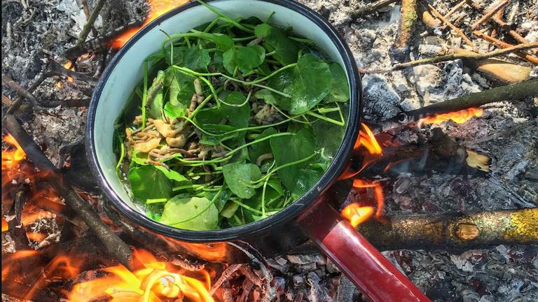 Magyar Bear Grylls-menü: főtt giliszta pocsolyavízzel