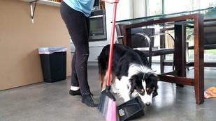 Ismerje meg Titkot, a kutyát, akinek a házimunkához van páratlan tehetsége