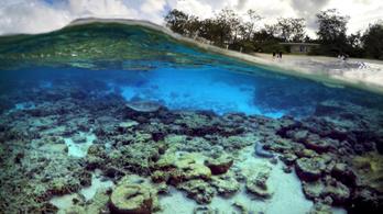 Durván pusztul a Nagy-Korallzátony