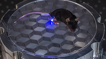 Vezeték nélküli, rádiófrekvenciás, távirányítós egeret terveztek