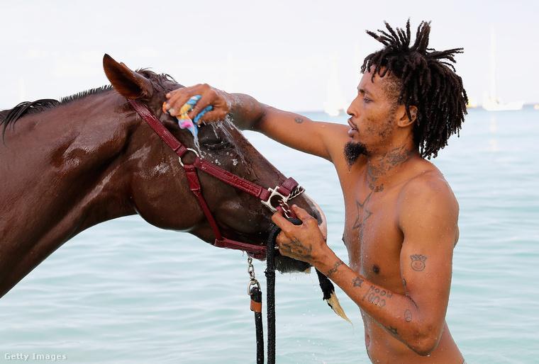 Szép tiszta lesz ez a ló.