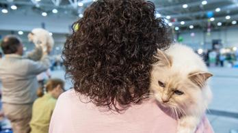 Macskákkal várták a világvégét