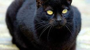 Ez a macska a bűnüldözésben vállalt jelentős szerepet