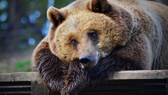 Ingyenes túrát indítanak a bibliai állatok megismerésére Budakeszin