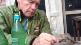 Arnold Schwarzenegger egy madárral osztotta meg reggelijét