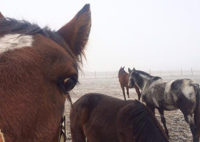 A kíváncsi lovak tükröt tartanak elénk